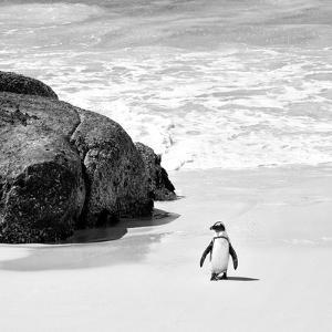 Awesome South Africa Collection Square - Penguin Alone on the Beach B&W by Philippe Hugonnard