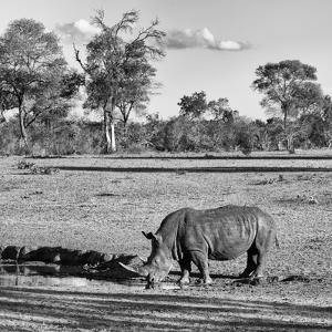 Awesome South Africa Collection Square - Rhinoceros in Savanna Landscape by Philippe Hugonnard
