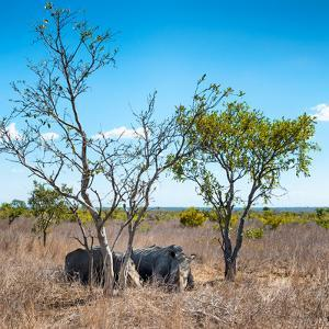Awesome South Africa Collection Square - Two Rhino sleeping in the Savanna by Philippe Hugonnard