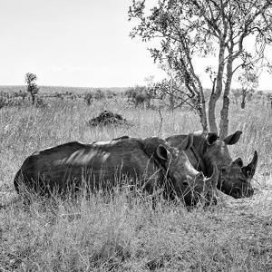 Awesome South Africa Collection Square - Two Rhinoceros sleeping B&W by Philippe Hugonnard