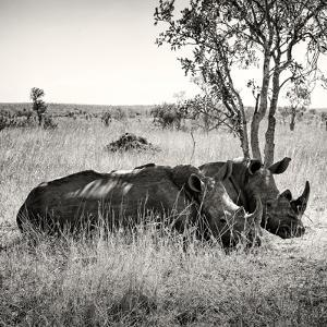 Awesome South Africa Collection Square - Two Rhinoceros sleeping by Philippe Hugonnard