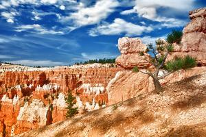 Bryce Amphitheater - Utah - Bryce Canyon National Park - United States by Philippe Hugonnard