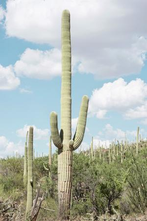 Cacti Cactus Collection - Saguaro Cactus Desert