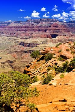 Cedar Ridge - Grand Canyon - National Park - Arizona - United States by Philippe Hugonnard