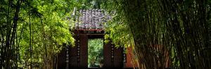 China 10MKm2 Collection - Bamboo Forest by Philippe Hugonnard