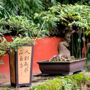 China 10MKm2 Collection - Bonsai Trees by Philippe Hugonnard