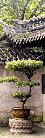 China 10MKm2 Collection - Bonsai by Philippe Hugonnard
