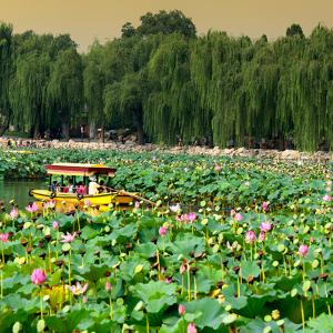 China 10MKm2 Collection - Lotus Flowers by Philippe Hugonnard