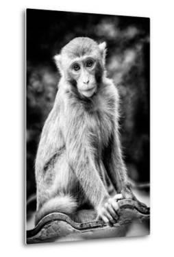China 10MKm2 Collection - Monkey Portrait by Philippe Hugonnard