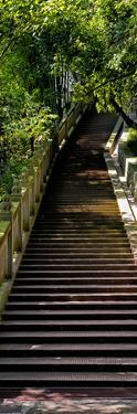 China 10MKm2 Collection - Stairway in the Forest by Philippe Hugonnard