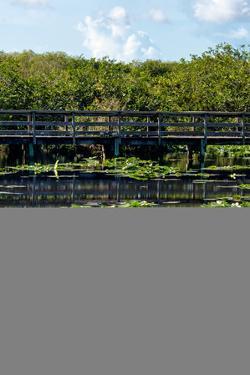 Crocodile - Everglades National Park - Unesco World Heritage Site - Florida - USA by Philippe Hugonnard