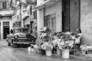 Cuba Fuerte Collection B&W - Sunflowers by Philippe Hugonnard