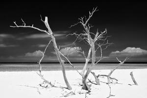 Cuba Fuerte Collection B&W - Trees and White Sand V by Philippe Hugonnard