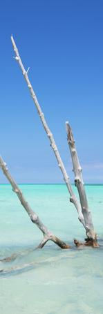 Cuba Fuerte Collection Panoramic - Aquatic Tree by Philippe Hugonnard