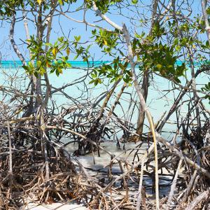 Cuba Fuerte Collection SQ - Mangroves by Philippe Hugonnard
