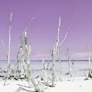 Cuba Fuerte Collection SQ - Ocean Wild Nature - Pastel Purple by Philippe Hugonnard