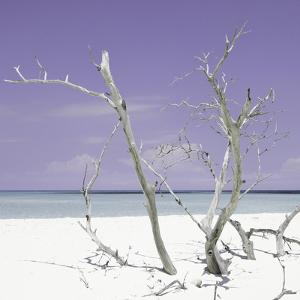 Cuba Fuerte Collection SQ - Purple Stillness by Philippe Hugonnard