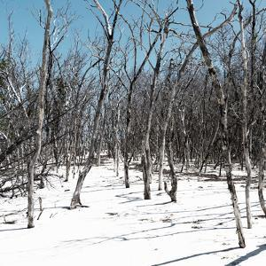 Cuba Fuerte Collection SQ - White Forest II by Philippe Hugonnard