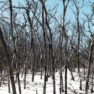 Cuba Fuerte Collection SQ - White Forest III by Philippe Hugonnard