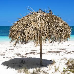 Cuba Fuerte Collection SQ - Wild Umbrella by Philippe Hugonnard