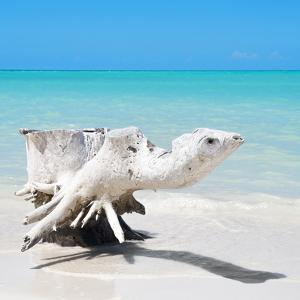 Cuba Fuerte Collection SQ - Wooden Turtle on the Beach by Philippe Hugonnard