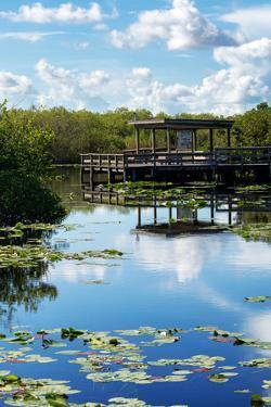 Everglades National Park - Unesco World Heritage Site - Florida - USA by Philippe Hugonnard