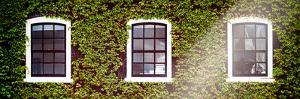 Facade of an English House with Ivy Leaves - Mallinson House in St Albans - London - UK by Philippe Hugonnard
