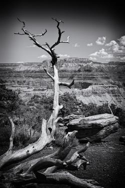 Grand Canyon - National Park - Arizona - United States by Philippe Hugonnard