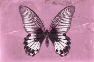 Miss Butterfly Agenor - Pale Violet by Philippe Hugonnard