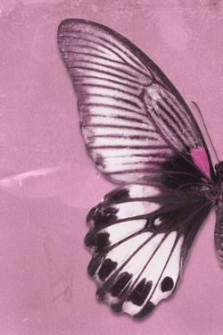 Miss Butterfly Agenor Profil - Pale Violet by Philippe Hugonnard