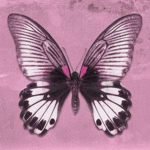 Miss Butterfly Agenor Sq - Pale Violet by Philippe Hugonnard