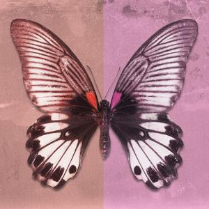 Miss Butterfly Agenor Sq - Red & Pale Violet by Philippe Hugonnard