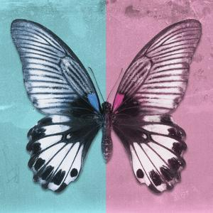 Miss Butterfly Agenor Sq - Turquoise & Pale Violet by Philippe Hugonnard