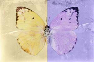 Miss Butterfly Catopsilia - Gold & Mauve by Philippe Hugonnard