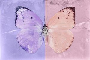 Miss Butterfly Catopsilia - Mauve & Pale Violet by Philippe Hugonnard