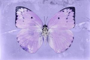 Miss Butterfly Catopsilia - Mauve by Philippe Hugonnard