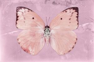 Miss Butterfly Catopsilia - Pale Violet by Philippe Hugonnard