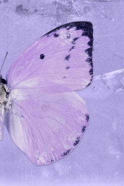 Miss Butterfly Catopsilia Profil - Mauve by Philippe Hugonnard