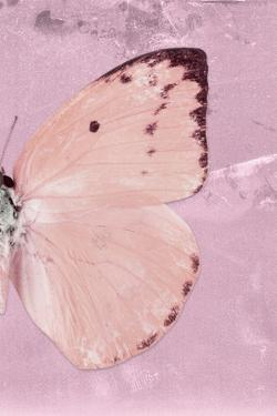 Miss Butterfly Catopsilia Profil - Pale Violet by Philippe Hugonnard