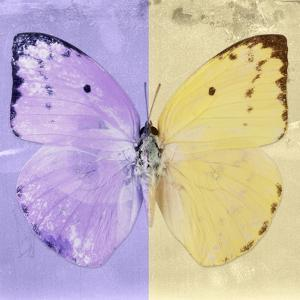 Miss Butterfly Catopsilia Sq - Mauve & Gold by Philippe Hugonnard