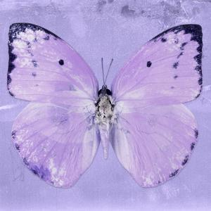 Miss Butterfly Catopsilia Sq - Mauve by Philippe Hugonnard
