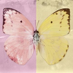 Miss Butterfly Catopsilia Sq - Pale Violet & Gold by Philippe Hugonnard