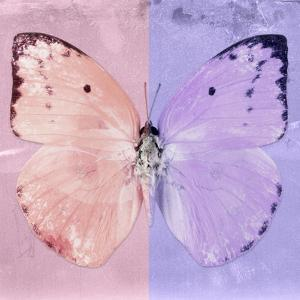 Miss Butterfly Catopsilia Sq - Pale Violet & Mauve by Philippe Hugonnard