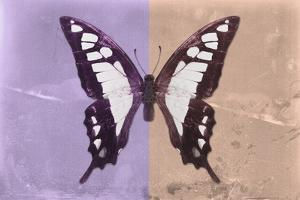 Miss Butterfly Cloanthus - Mauve & Coral by Philippe Hugonnard