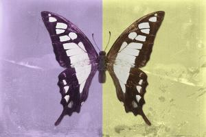 Miss Butterfly Cloanthus - Mauve & Yellow by Philippe Hugonnard