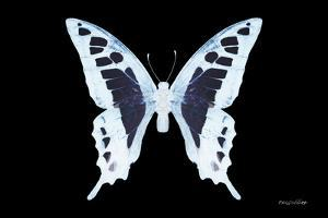Miss Butterfly Cloanthus - X-Ray Black Edition by Philippe Hugonnard