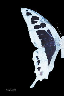 Miss Butterfly Cloanthus - X-Ray Left Black Edition by Philippe Hugonnard