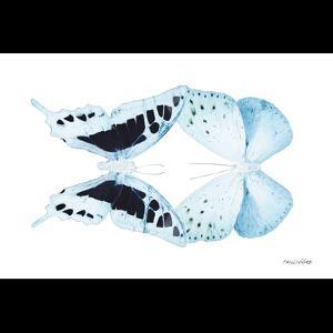 Miss Butterfly Duo Cloanthaea Sq - X-Ray B&W Edition by Philippe Hugonnard