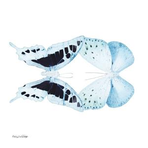 Miss Butterfly Duo Cloanthaea Sq - X-Ray White Edition by Philippe Hugonnard