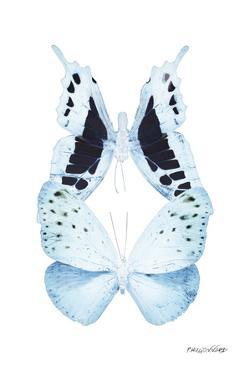 Miss Butterfly Duo Euploanthus II - X-Ray White Edition by Philippe Hugonnard